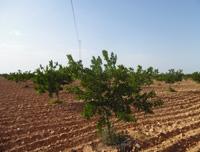 Domaine ben Saida: production et vente d'amande
