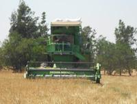 Ben Saida: Vente Cereale bilogique