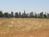 Ben Saida: Vente Cereale à sfax